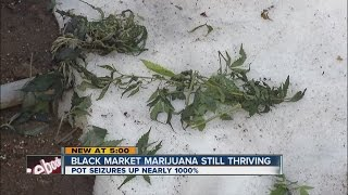 Black Market Marijuana Still Thriving